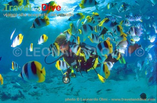 butterflyfishes-diver-13-9-tif-copy