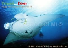 french-polynesia-bora-bora-island-mantaray-diver-6-4-jpg2-copy