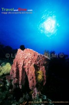 indonesia-bunaken-1-14-tif-copia-copy