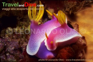 indonesia-bunaken-3-14-tif-copia-copy