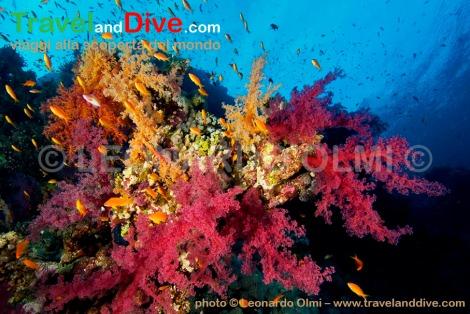 mar-rosso-egitto-dsc_1568-tif-copia-copy