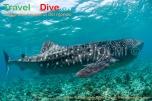 seychelles-dsc_3767-tif-copia-copy