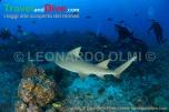 shark-lemon-divers-dsc_3561-tif-copy