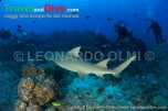 shark-lemon-divers-dsc_3561-tif-copy