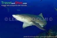 shark-lemon-dsc_3518-tif3-copy
