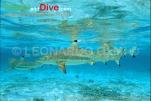 sharks-blacktip-1-14-tif-copy