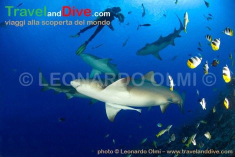 sharks-lemon-diver-dsc_3534-tif2-copy