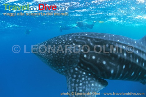 similan-2-14-tif-copia-copy