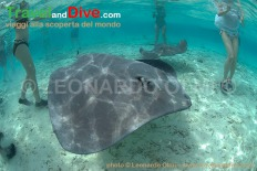 stingrays-snorkelers-dsc_3806-tif-copy