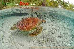 turtle-green-dsc_4486-tif-bis-copy