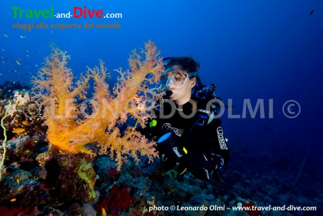 Red Sea, Sudan, Sanganeb plateau south, soft coral and diver DSC_4404 TIF copia copy.jpg