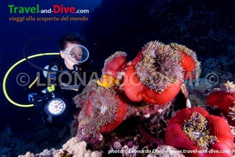 Red Sea, Sudan, Sha'ab Rumi south, anemonefish with clownfish, diver DSC_6100 TIF copia copy