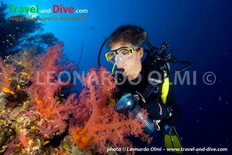Red Sea, Sudan, Sha'ab Rumi south, soft coral and diver DSC_5224 TIF copia copy.jpg